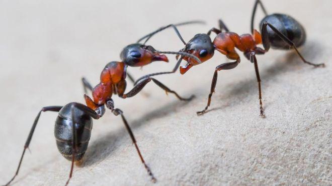 Substância da picada da formiga é transformada em combustível para ônibus