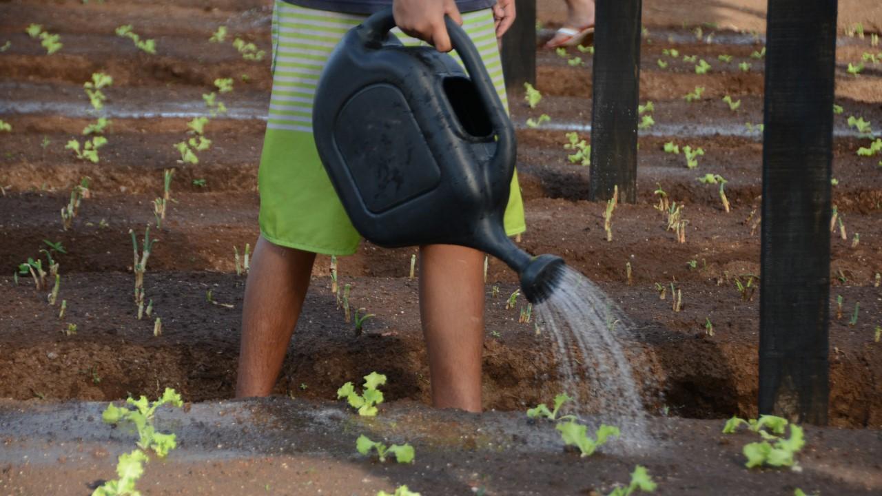 Jardim Taquari ganha Horta Empreendedora nesta quinta-feira, 20