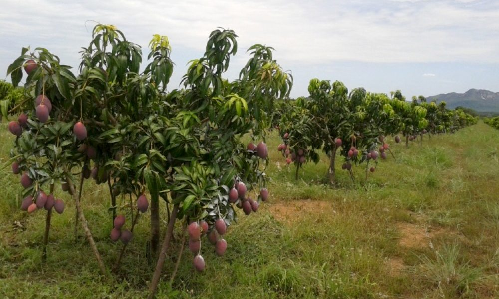 Dia Técnico debate a fruticultura irrigada no Tocantins