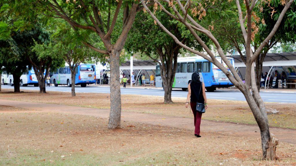 Cidade mais bonita e saudável com ações direcionadas pelo Plano de Arborização
