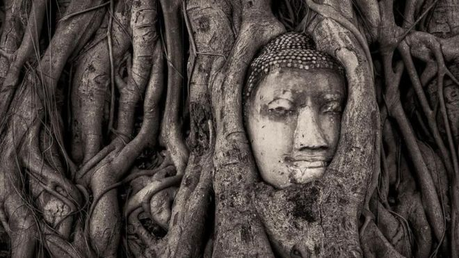 A escultura de 700 anos que está sendo 'engolida' por árvores