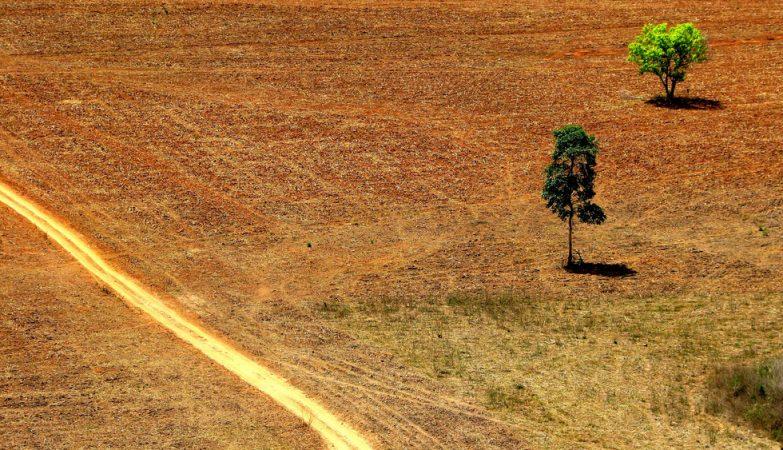 Investidores globais fortalecem coalizão para deter o desmatamento no Cerrado no Brasil