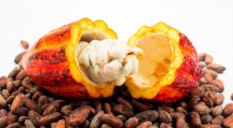 Biotecnologia pode evitar extinção do cacau e garantir produção de chocolate