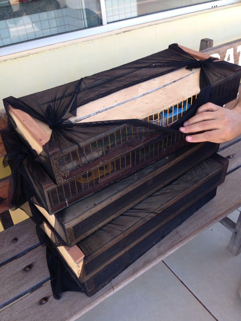 Cefau recebe 170 pássaros apreendidos por fiscais do Naturatins
