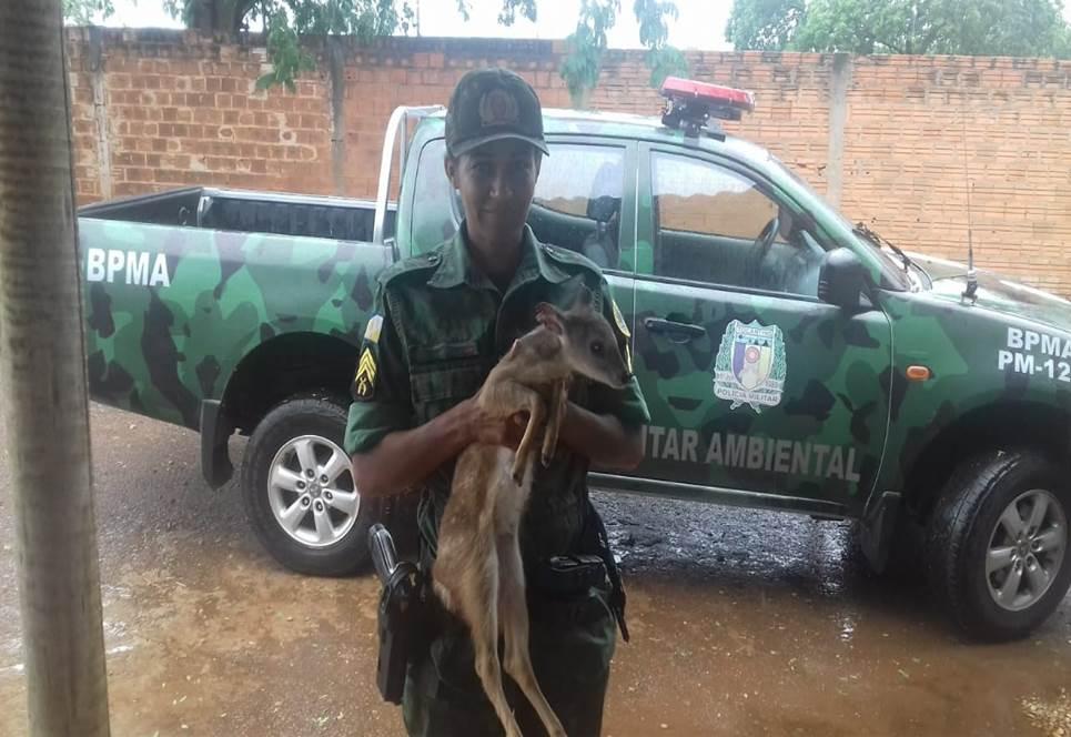 Filhote de veado é entregue à equipe do Batalhão Ambiental da PM em Porto Nacional
