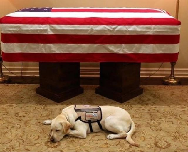 Cão de George H. W. Bush fica ao lado do caixão de ex-presidente