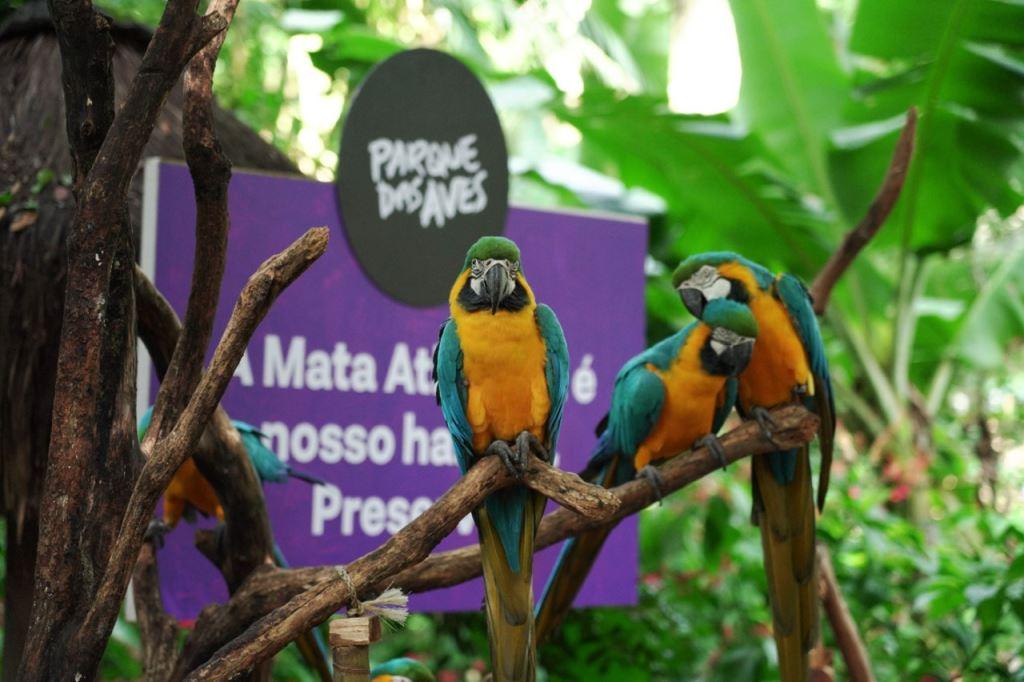 Em Foz do Iguaçu, Parque das Aves lança nova narrativa em sua trilha, focada na Mata Atlântica