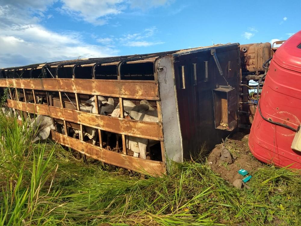 Carne de gado é saqueada após tombamento de carreta e dois homens são presos