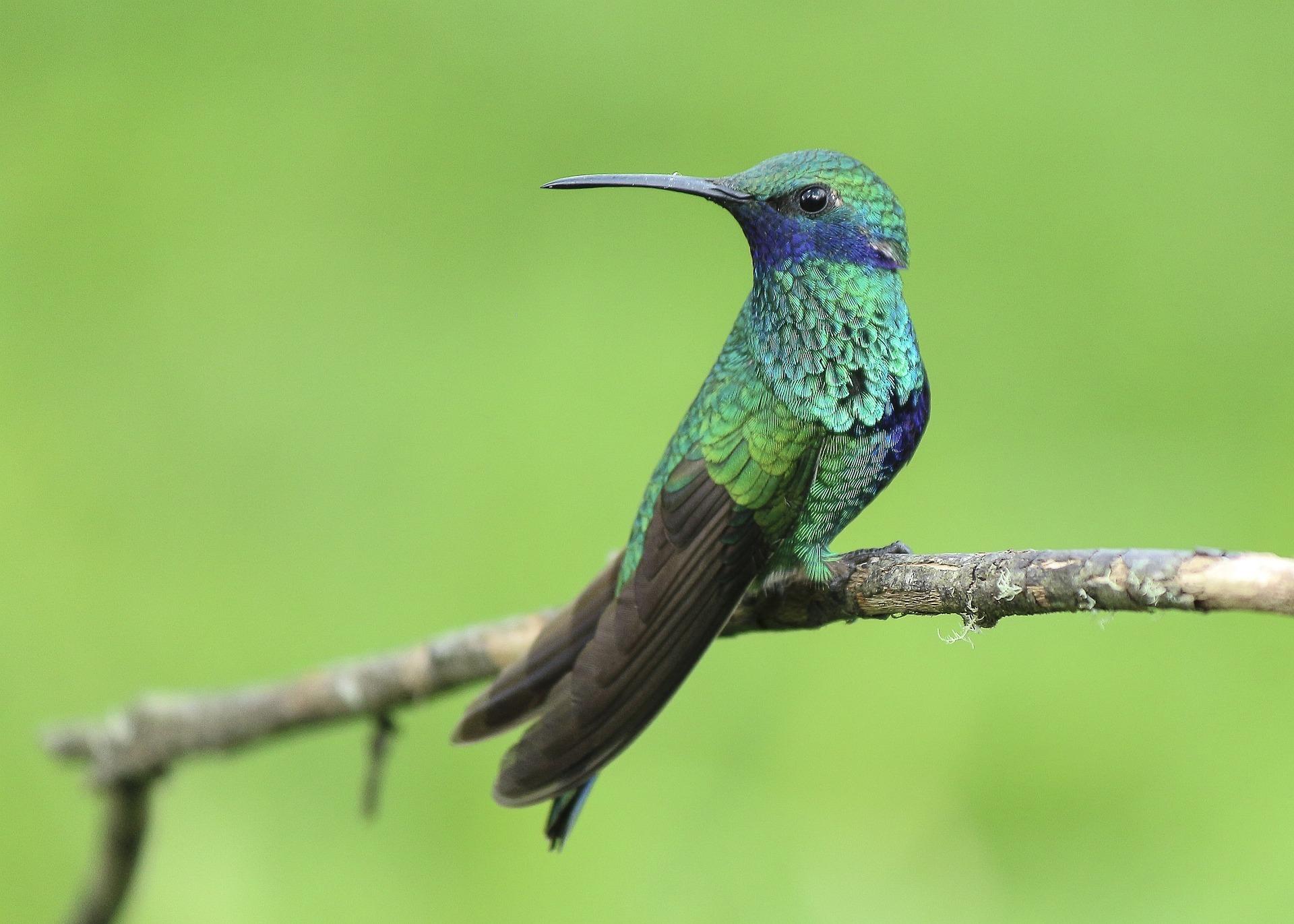 Especialista alerta para desequilíbrio socioambiental com a extinção de aves