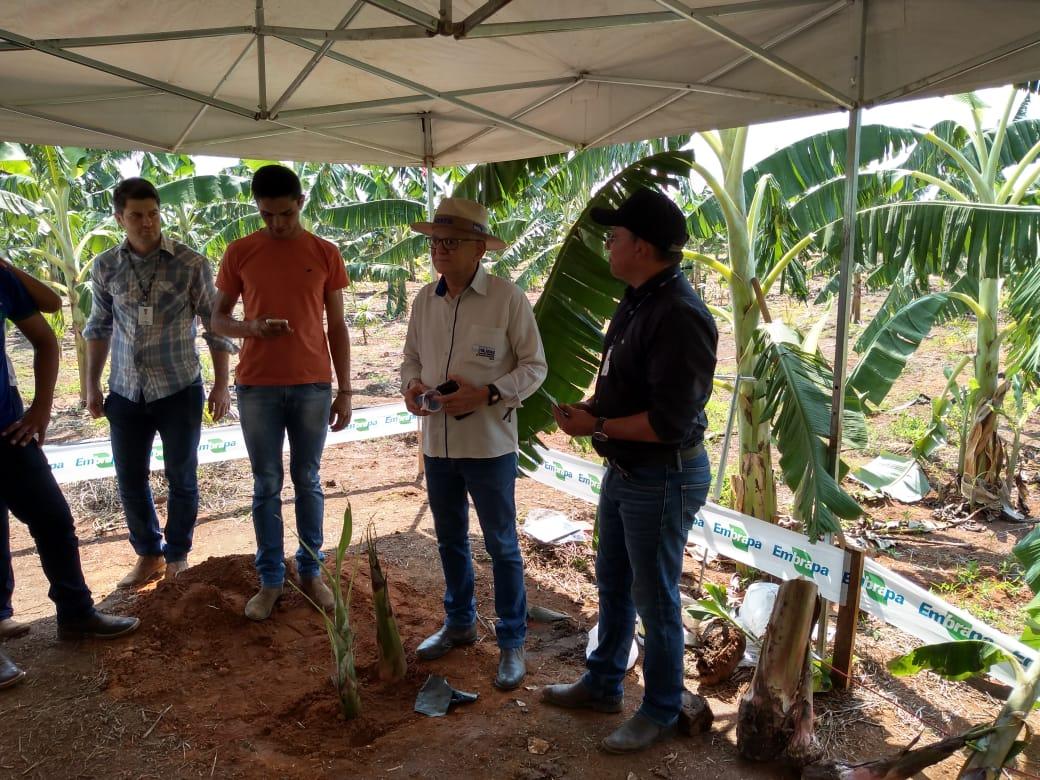 Agosto Verde: produtores descobrem as vantagens do plantio consorciado de açaí e técnicas de produção de leite a pasto