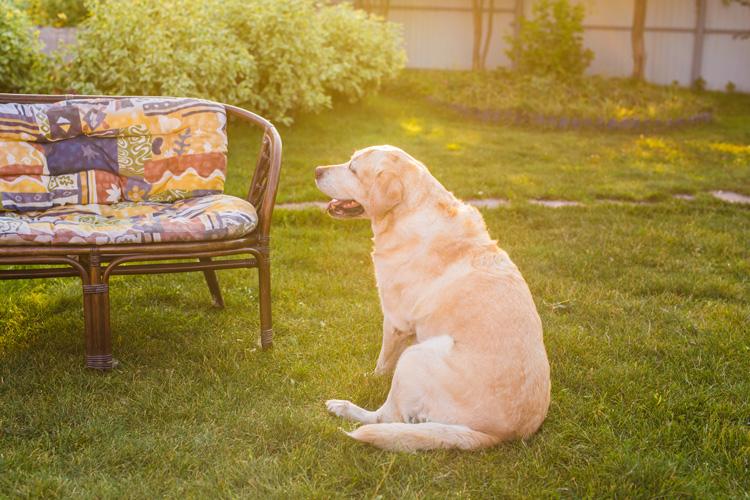 Tem dó de deixar o cachorro fora de casa? Saiba como agir nesta situação