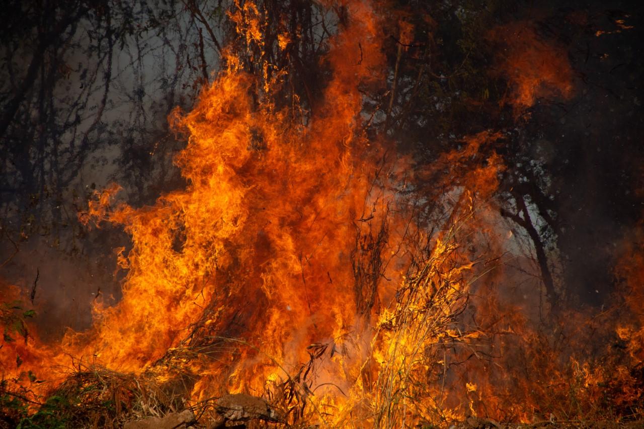 MPTO quer saber se reeducandos qualificados como brigadistas estão atuando no combate às queimadas