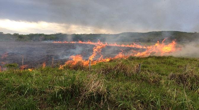 Em manifesto, 28 entidades alertam para tragédia das queimadas no Pantanal