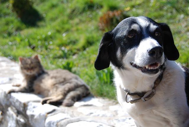 Adolescência também acontece para cães e gatos, você sabia?