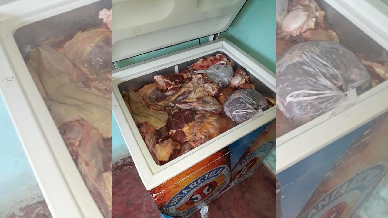 Suspeito de usar quintal de casa para abate clandestino de boi é preso em Gurupi