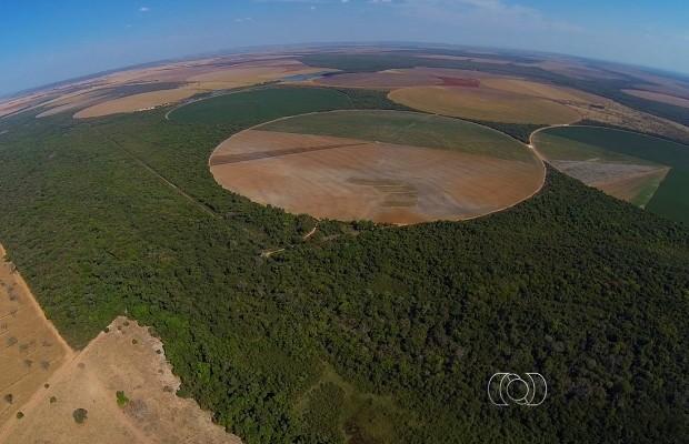 Acordo assinado com o MPTO prevê replantio de 60 hectares de áreas protegidas e pagamento de indenização de R$ 150 mil