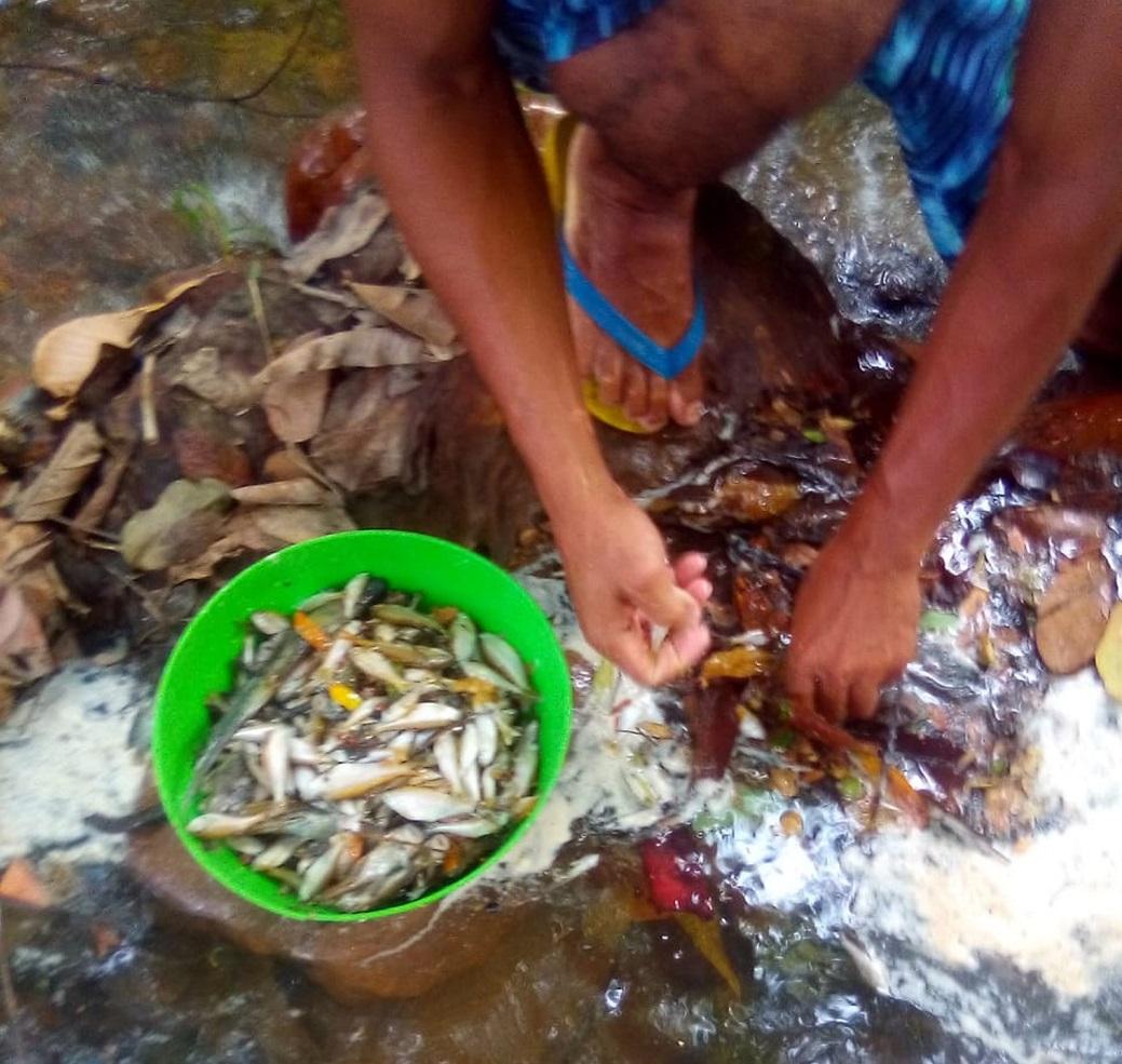 Peixes começam a morrer após espuma branca aparecer em córrego de Novo Acordo