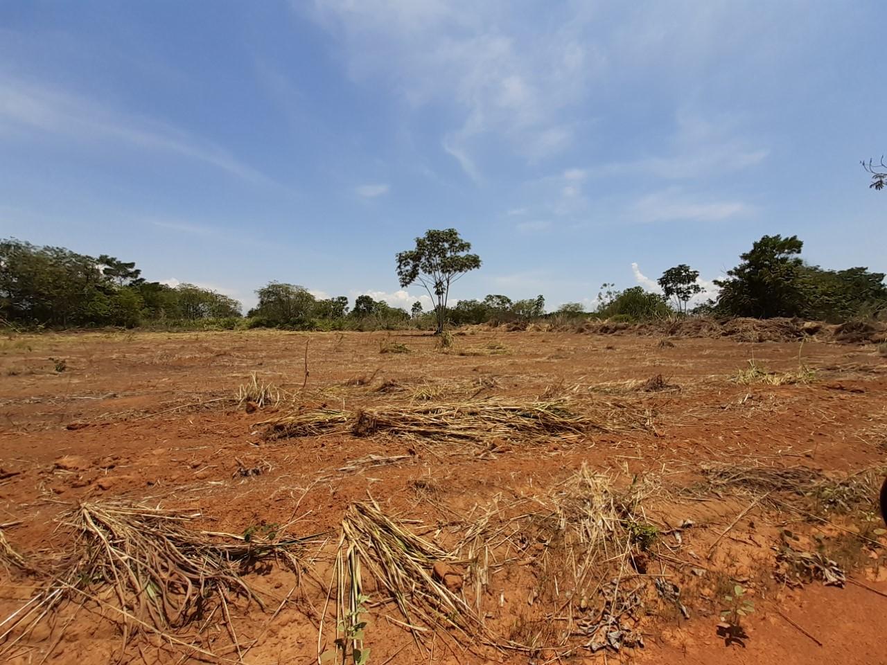 Fazendinha Calor Humano terá cultivo de milho e arroz que serão destinados para as escolas de Palmas