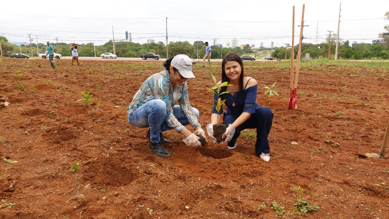 Servidores realizam plantio de mudas nativas e frutíferas em área adotada pelo Ruraltins