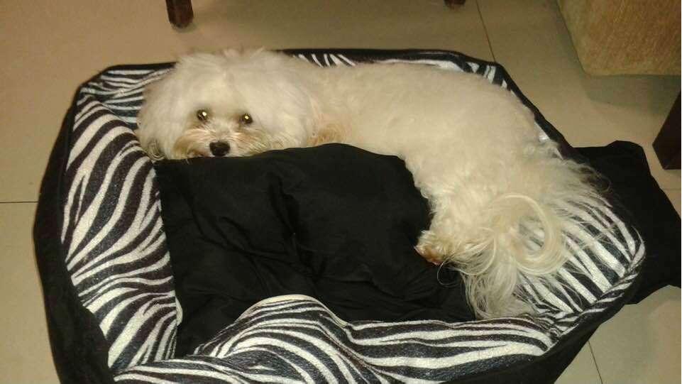 Cachorro morre e mulher fica ferida após ataque de capivaras em Balneário Camboriú (SC)