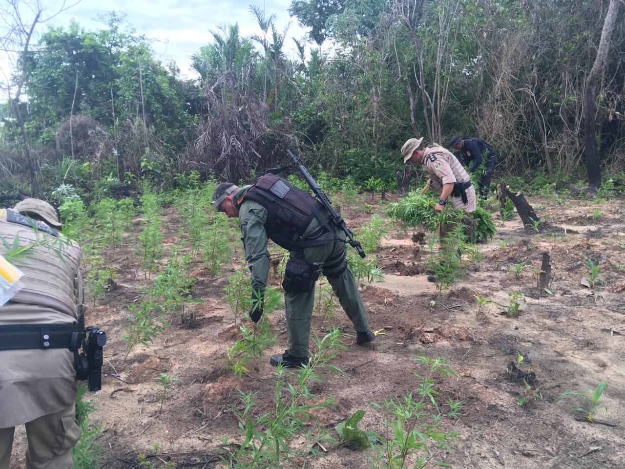 Polícia encontra plantação de maconha em ilha no meio do rio Araguaia