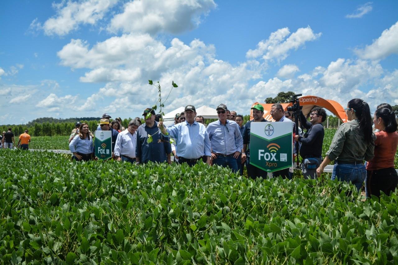 Pesquisadores apresentam técnicas de manejo de doenças na produção da soja em dia de campo da Frísia e da Fundação ABC