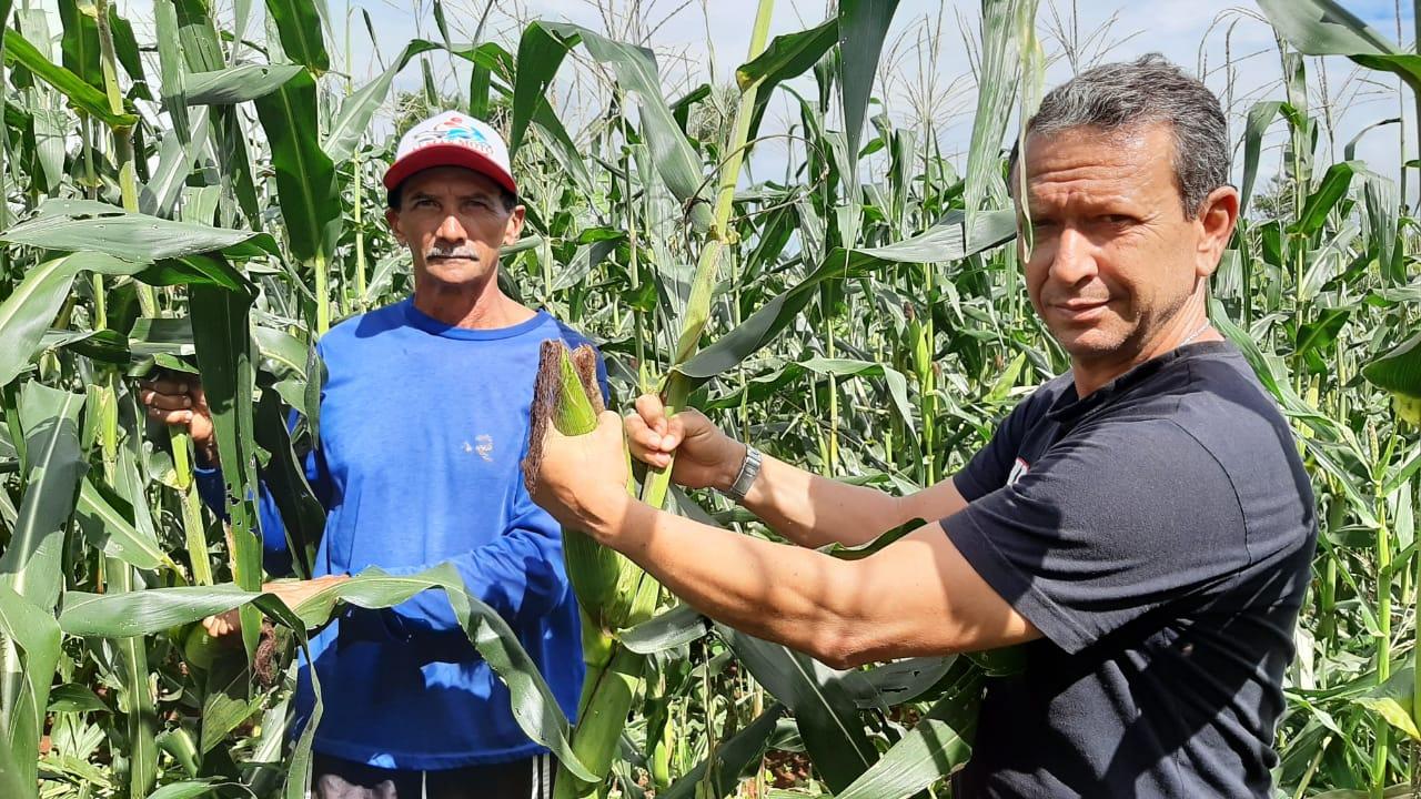 Com assistência técnica, produtores comemoram a boa safra de milho verde no sudeste do Estado