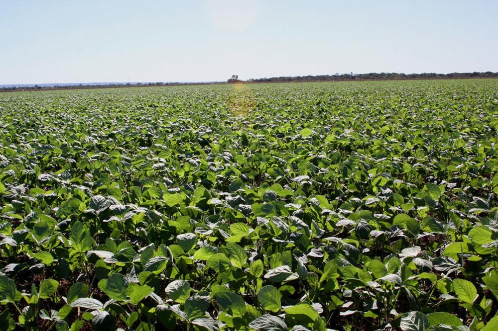 Plantio de soja nas várzeas tropicais é prorrogado por mais 15 dias no Tocantins