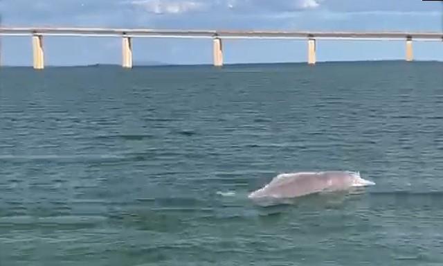 Naturatins orienta população para manter distância de botos que estão sendo vistos no lago de Palmas