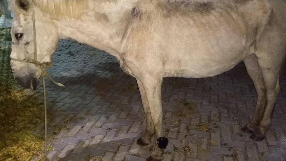 PM encontra cavalo com tornozeleira eletrônica no Ceará; criminoso é identificado e está foragido