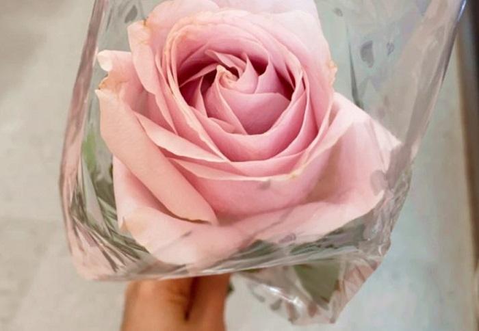 Profissionais de saúde do Hospital Geral de Palmas recebem rosas da loja Casa 37