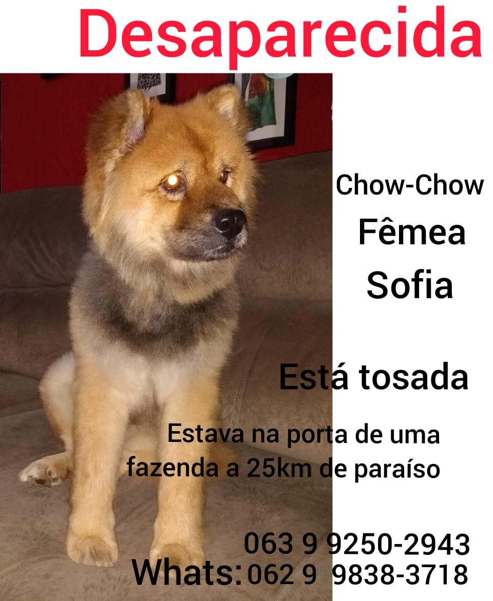 Família procura por cadela desaparecida em fazenda de Paraíso