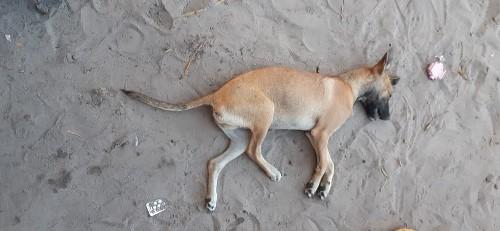 Homem é autuado após matar cachorro sufocado no norte do Tocantins