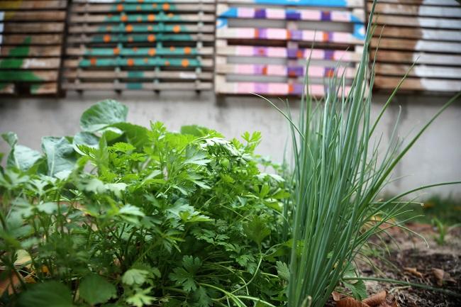 Cultivo de horta é opção de atividade em casa em tempos de distanciamento social