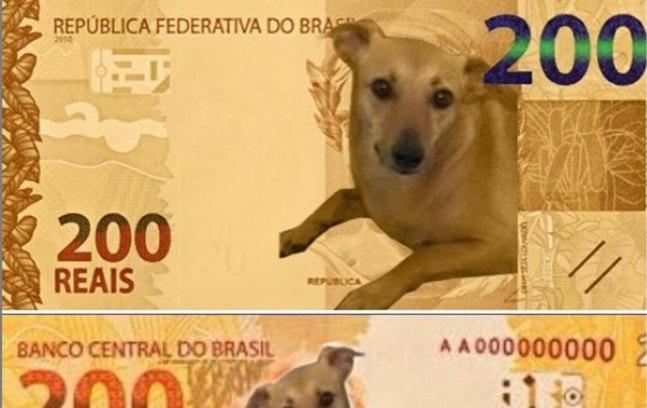 Deputado lança campanha para 'vira-lata caramelo' estampar nota de R$ 200