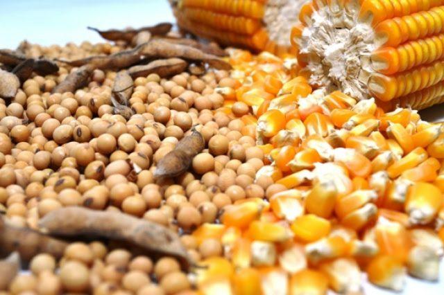Governo Federal zera tarifa de importação de milho e soja para conter preços