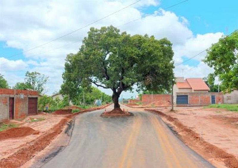 Pequizeiro é preservado durante pavimentação de rua em Araguaína