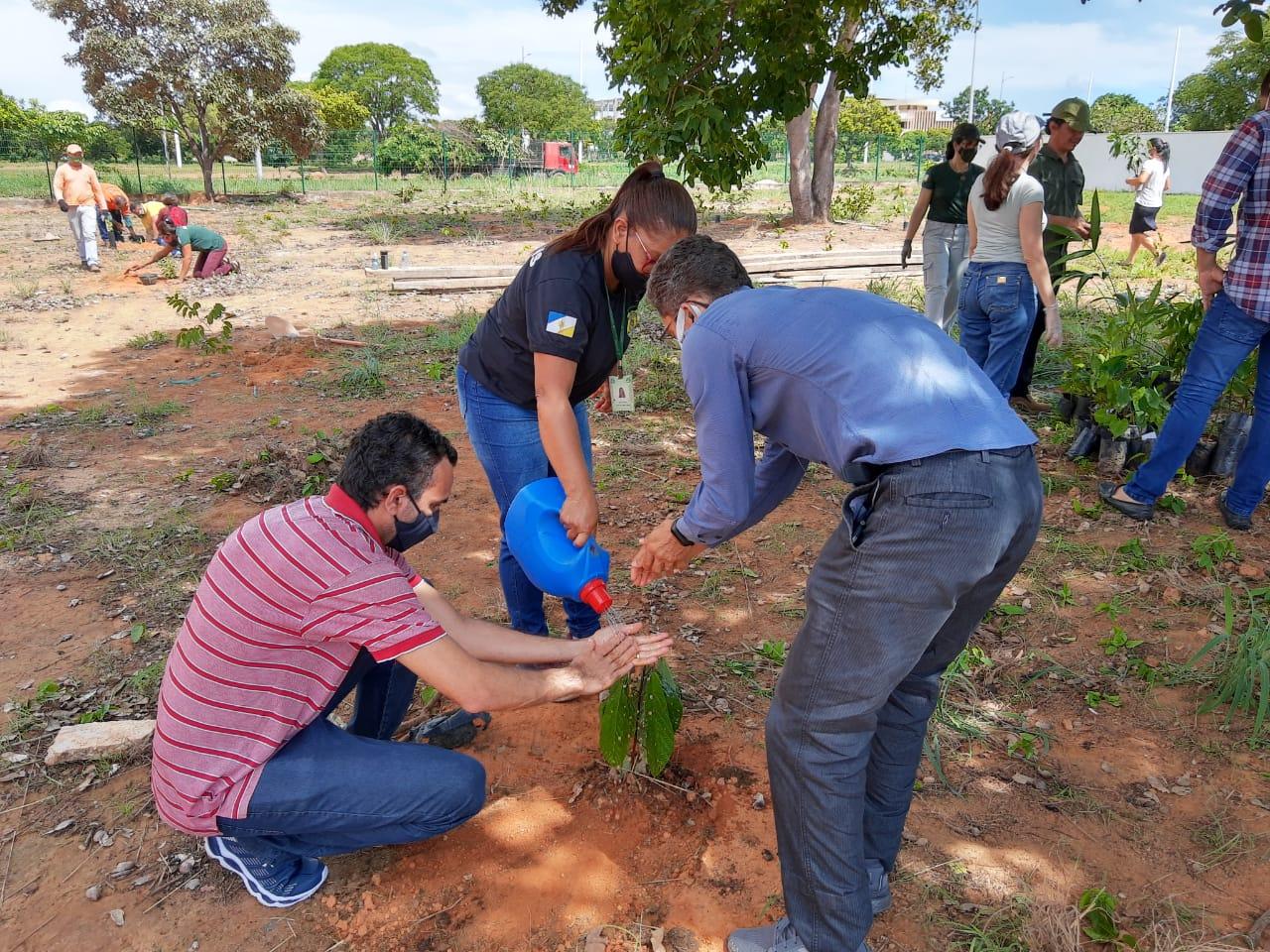 Servidores do Naturatins realizam plantio de mudas frutíferas entorno do novo prédio