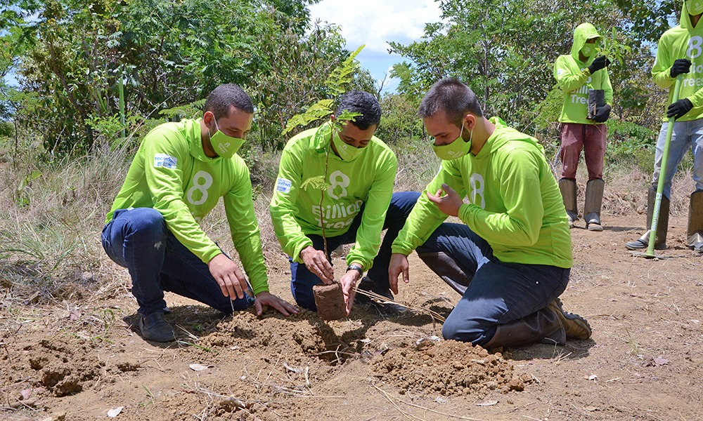 Meio Ambiente e ONG 8 Billion Trees realizam plantio de mudas no Parque Estadual do Lajeado