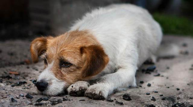 Ausência de política em Palmas voltada aos animais domésticos abandonados é discutida em reunião no MPTO