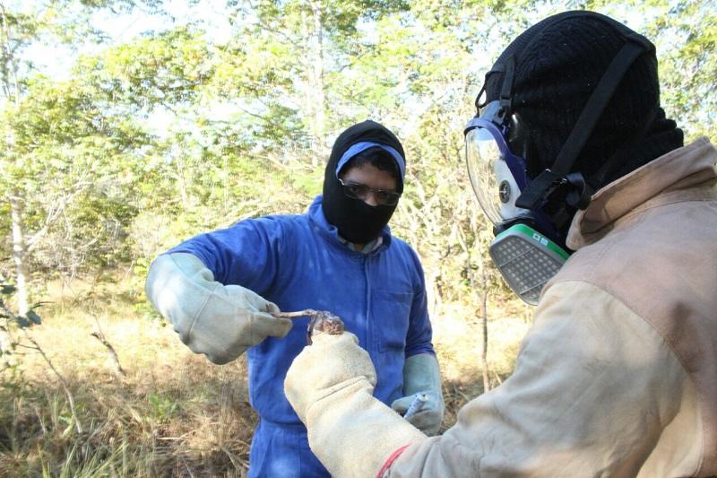 Após registro de três focos de raiva em herbívoros, Adapec recomenda vacinação nas regiões afetadas