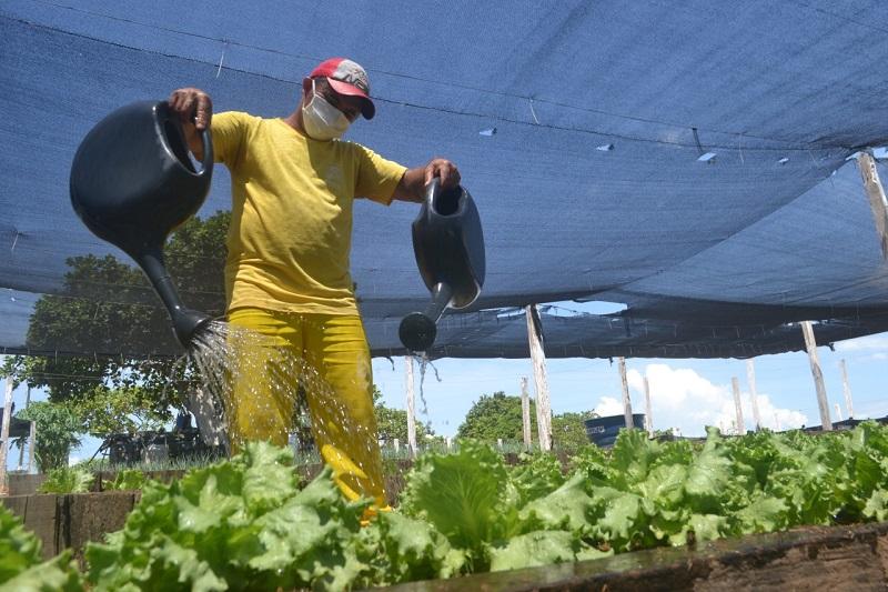 Hortas garantem trabalho, melhorias estruturais, melhor alimentação e remição para presos em Unidades Penais do Tocantins