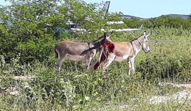 Avião com vacinas da Covid-19 bate em jumento durante pouso na Bahia