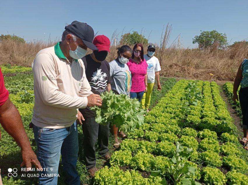 Curso de Olericultura do Senar incentiva produção de Hortaliças