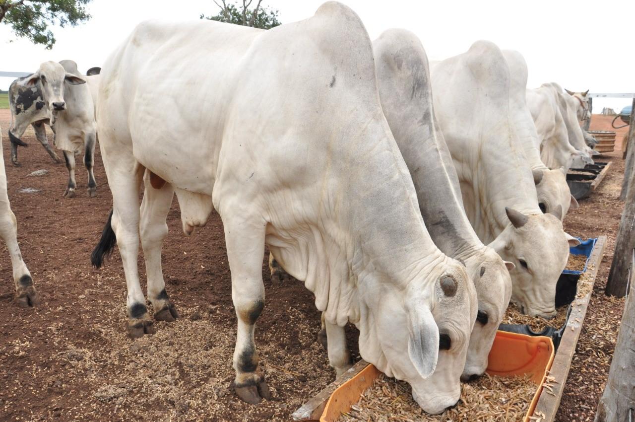 Seagro incentiva produtores quanto ao uso de suplementação alimentar para bovinos no período de seca