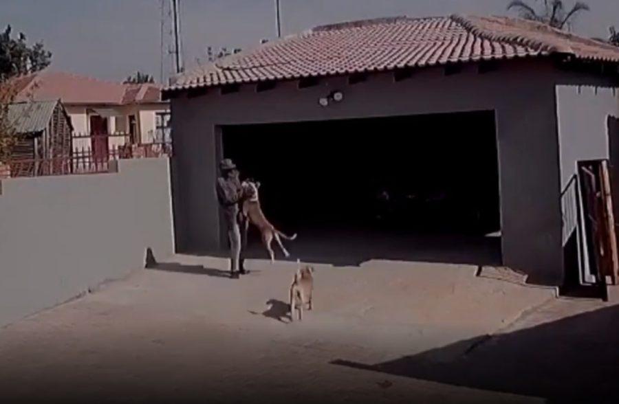 Cães ferozes atacam homem após pular cerca na tentativa de roubar residência