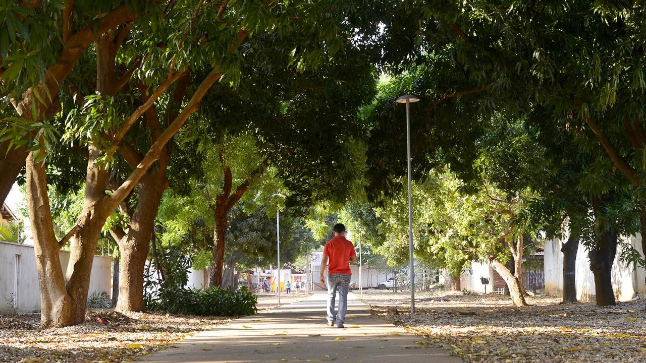 Dia da Árvore: Palmas contabiliza 20 mil mudas plantadas em quase três anos