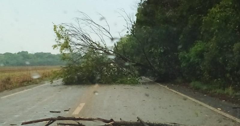 Trânsito na TO-080, entre Marianópolis e Caseara, fica lento após árvores caírem na pista