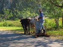 14. Hay que luchar! Débrouillardise des cubains comme ici un surf à vache pour tracter les choses lourdes sur la route. Ils sont très ingénieux, recyclent tout pour contrebalancer l'absence des premières nécessités dans les étals des magasins (ou à des prix inabordables).