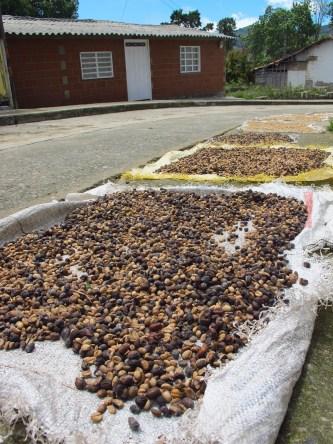 Séchage des grains sur la route